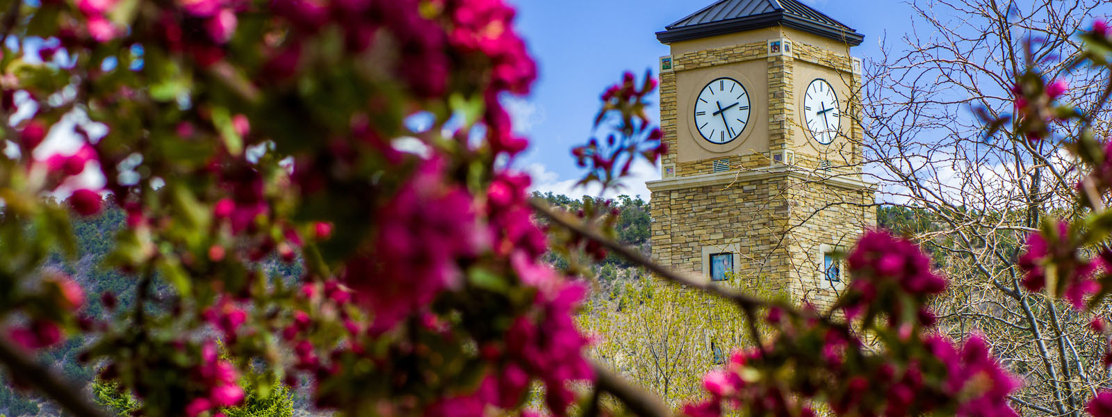 clock tower and spring flowers